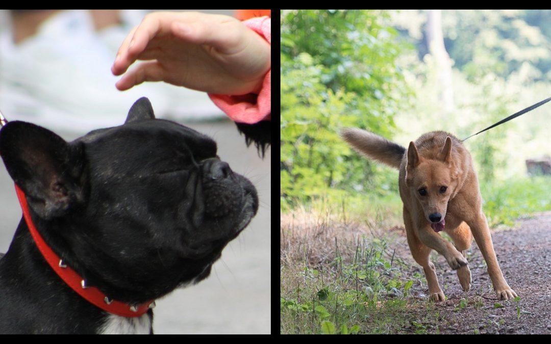 Mi alegato a favor de la comunicación con el perro