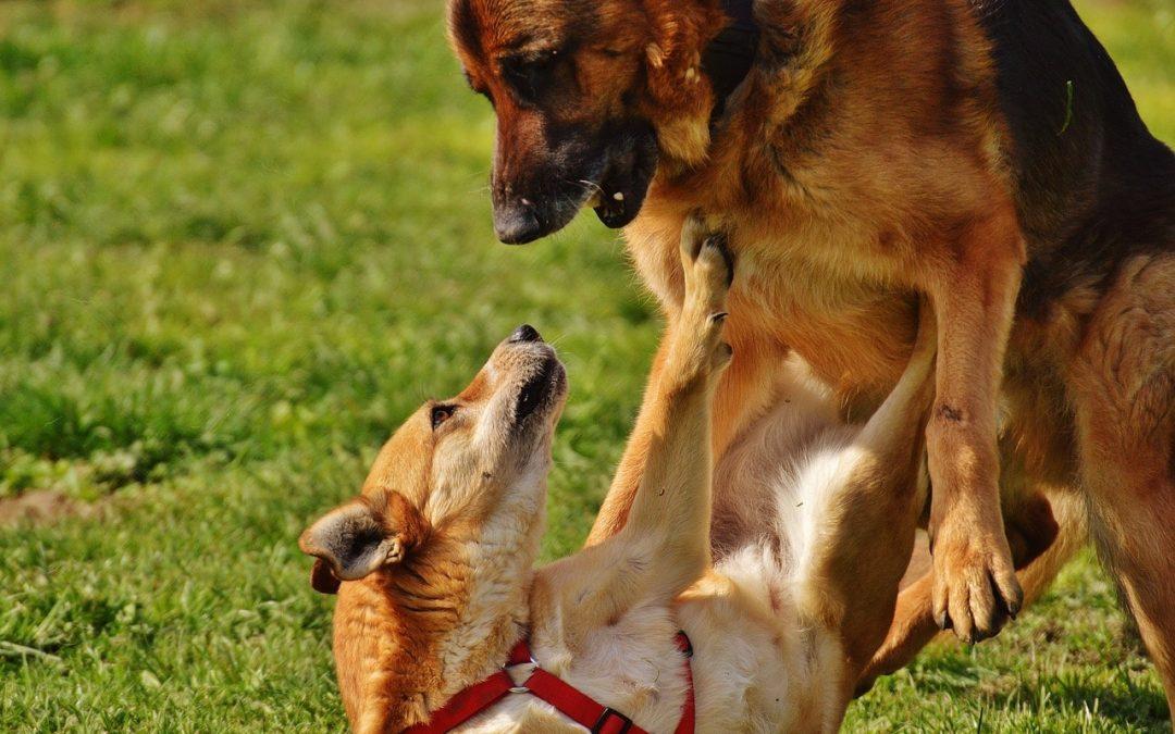 ¿Perros juguetones o perros sin modales?